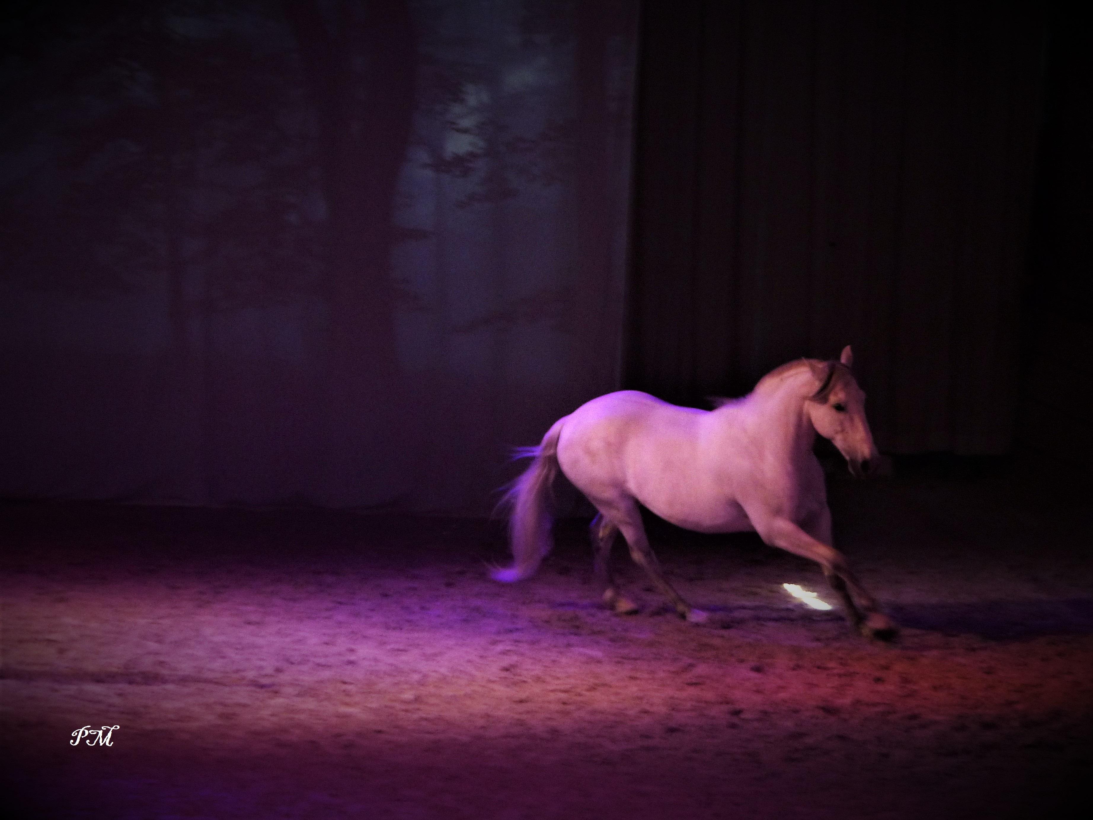 cheval pure race espagnole liberté manège d'Aure